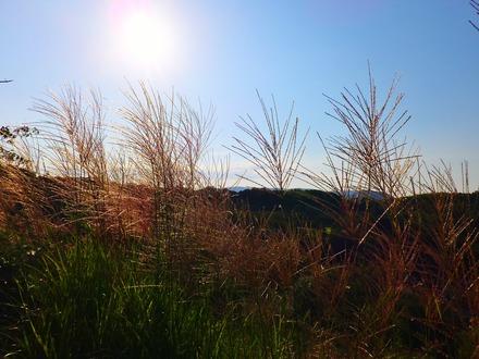 28・午後4時、秋の陽が傾くのは早い
