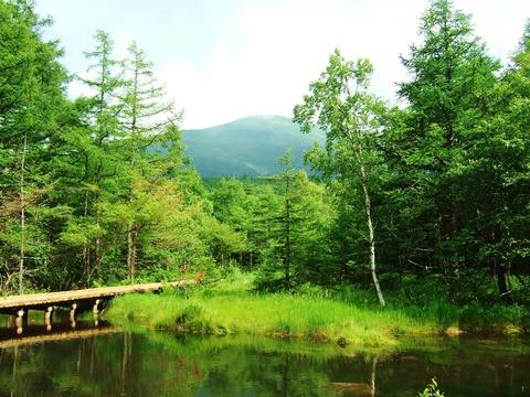 御泉水自然園より蓼科山を望む