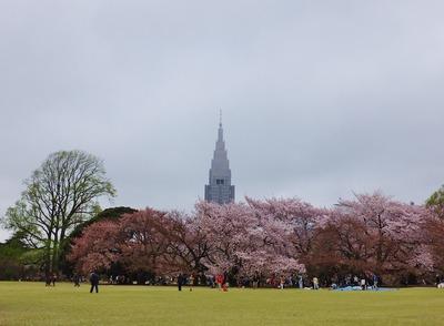 1・2015年の新宿御苑の花見