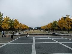 ゲート前の銀杏並木