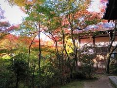 圓光寺 境内を彩る紅葉