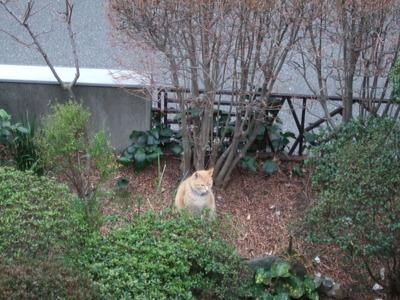 4・庭の麟太郎