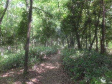 木漏れ日の径