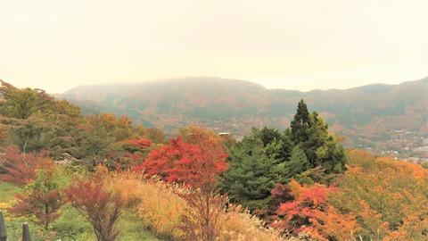 箱根早雲山からの紅葉
