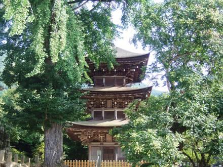 大銀杏と三重塔