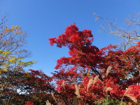 24・秋の絶景