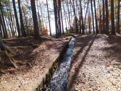 林間をゆく真中の水路