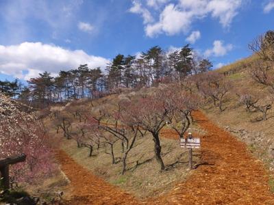9・山腹に広がる梅百花園