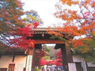 永観堂門前で息をのむ紅葉の競演