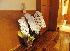 """京都の割烹""""まつおか""""からも胡蝶蘭が届いていました"""