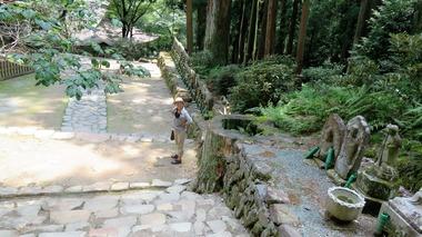 18・五重塔を損壊した樹齢600年の杉の切り株