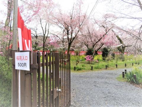 �桜苑 有料500円