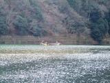 保津川下りの小舟