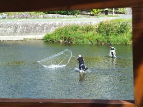 鴨川で投網する人、何だか風流・・・