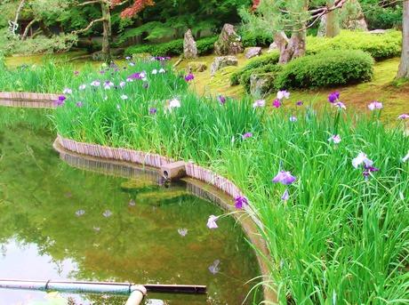 しょうざん庭園・花しょうぶ