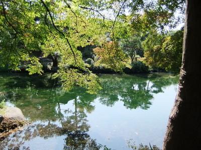 紅葉の映る池