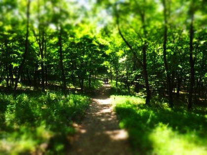 木漏れ日の丘を歩く