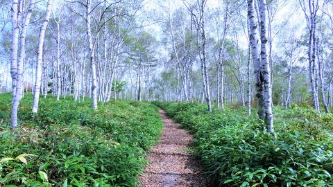 11・群生林の散歩道