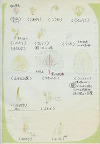 14・山菜の説明書き