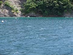 浅茅湾の真珠の養殖