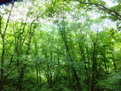2011_08012001年8月蓼科蝉時雨0002