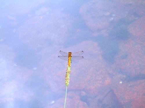 蜻蛉と湖面の空?