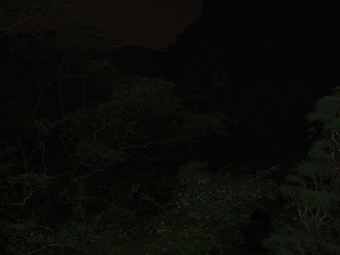木の枝にホタルの灯りが・・