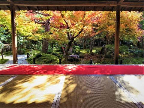 額縁庭園ブログ1