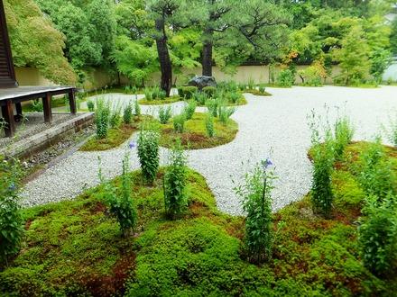 黴雨に映える杉苔