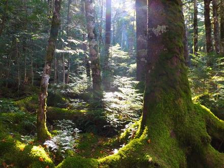 3・苔と原生林