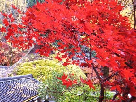 紅葉と茅葺