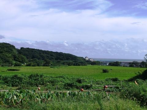 対馬、赤米神田と豆酘の海