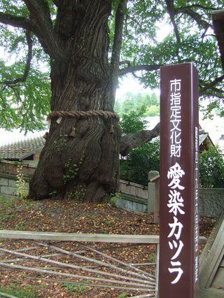 愛染桂の碑