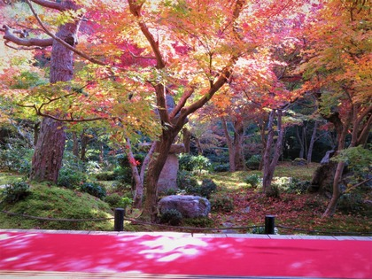 圓光寺 額縁庭園ブログ4