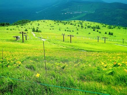 車山高原の斜面いっぱいにニッコウキスゲ