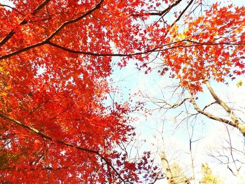 高遠城址公園・紅葉
