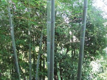窓から竹藪の風情