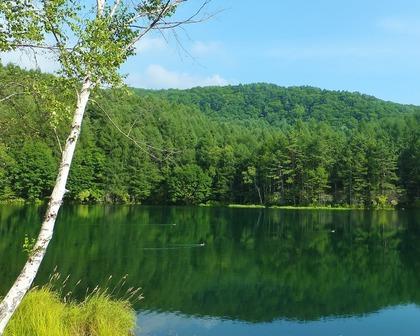 三羽の鴨が湖面を滑る
