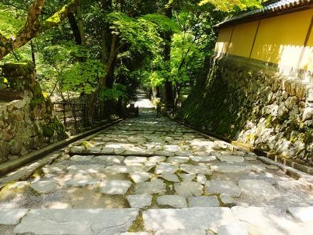 9・蓬莱庭から本堂へのぼる趣きのある石段
