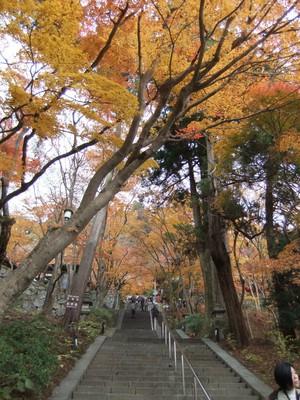 本殿への階段に紅葉のトンネル