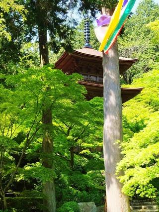 17・新緑に埋もれる三重塔