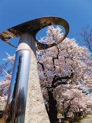 オブジェと満開の桜