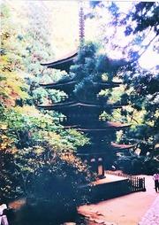 15・38年前の室生寺五重塔 (905x1280)