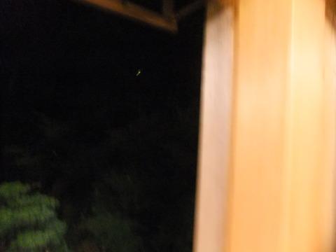 2011_06142011年6月14日京都0660