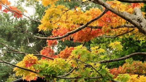 6・若松寺(じゃくしょうじ)の紅葉