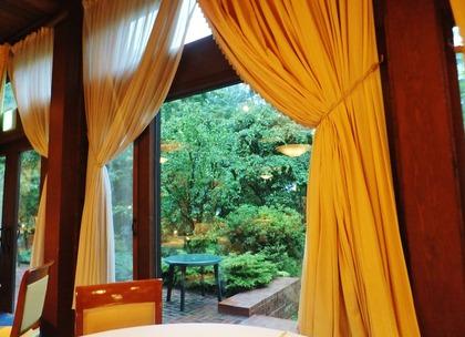 窓外に緑の木立をみる