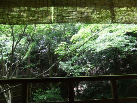 2011_06142011年6月14日京都0881