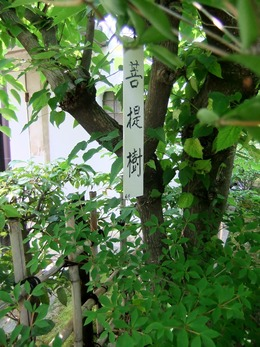 菩提樹の名札