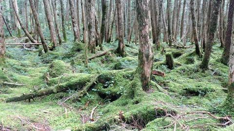 11・白駒の森を覆いつくす苔