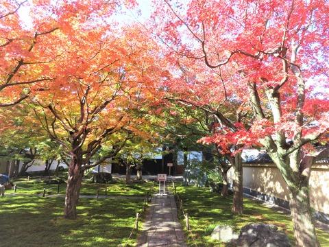 大徳寺黄梅院の門内の紅葉